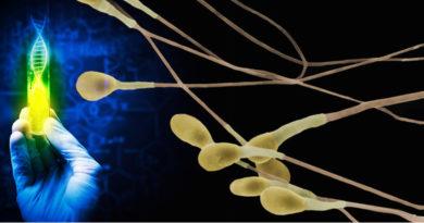Inquinamento ambientale: danno genetico e alterazioni epigenetiche nelle cellule germinali maschili