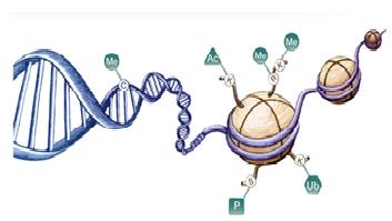 Epigenetica , spermatogenesi e infertilità maschile