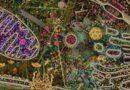 La Membrana cellulare tra caos e ordine biologico. Omeostasi e Medicina Integrata personalizzata.